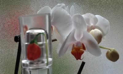 Flower by Kenzo, Parfum