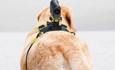 Mit Sonys AKA-DM1 wird der Hund zum Kameramann