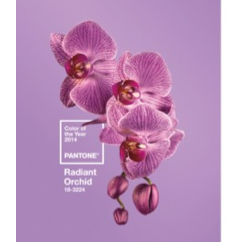 Radiant Orchid: Die offizielle Farbe des Jahres 2014